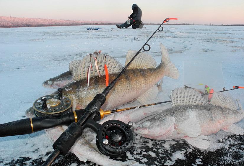 Рыбалка зимой на судака: особенности и советы