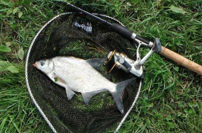 Рыба в подсачике