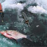 Ловля на зимний поплавок