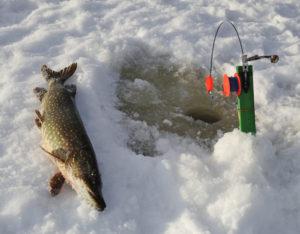 Зимняя ловля щуки на жерлицы