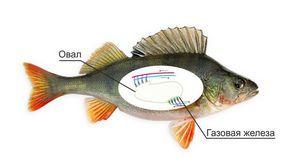 Изображение 2 : Какое давление лучше для рыбалки