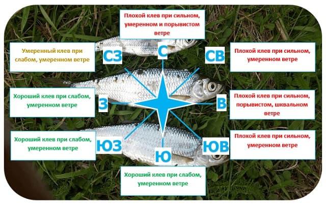 клев рыбы и направление ветра