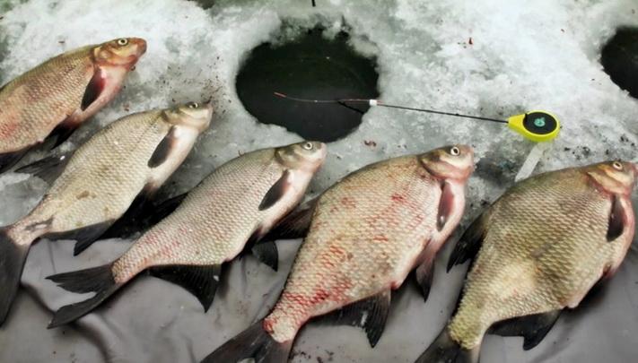 Отличный улов зимой