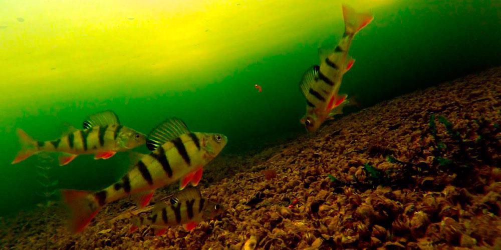 Фото с подводной камеры
