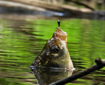 Эффективная ловля окуня на мормышку летом с берега