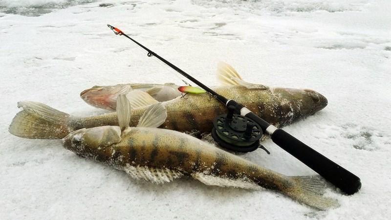 Ловля судака на раттлины зимой фото 1