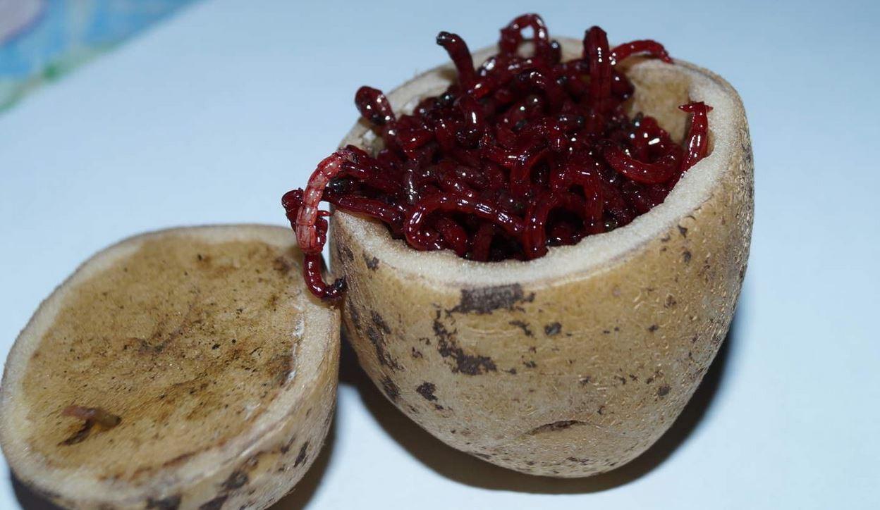 Хранение мотыля в картошке