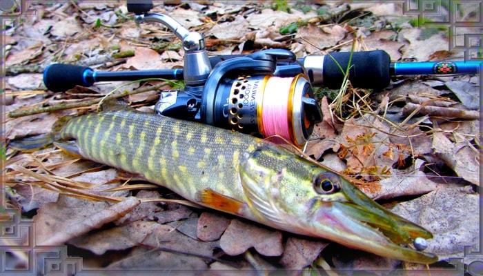 Осенняя рыбалка ну щуку