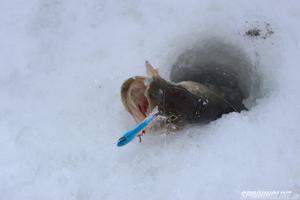 Изображение 1 : Какую леску лучше выбрать для зимней рыбалки?