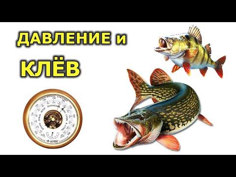 Давление для рыбалки летом и зимой. При каком давлении клюет рыба. Давление и клев рыбы