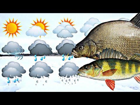 Идеальная погода для рыбалки зимой какая она? Основной фактор зимой влияющий на клев рыбы зимой?