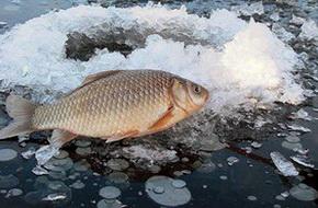 На безмотылку ловится любая рыба, в том числе и трофейный карась