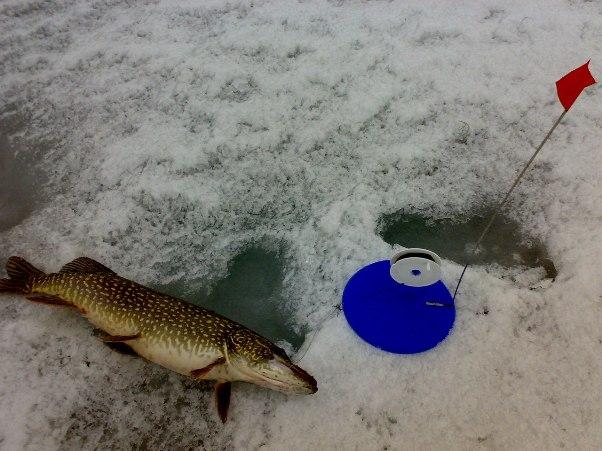 Техника и тактика ловли щуки на жерлицы зимой