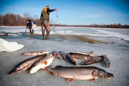 Зимняя ловля на косынку