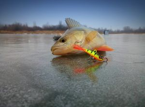 Изображение 4 : Зимняя ловля. Блеснение