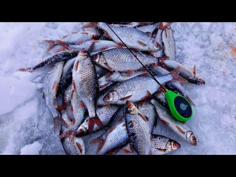 ПОСТАВИЛ ЭТУ БЕЗМОТЫЛКУ И ПОПЁРЛО! Ловля плотвы зимой на реке 2021.
