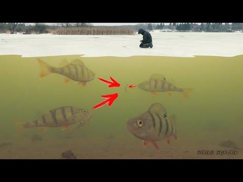 Рыбалка зимой на Гвоздешарик! Безмотылка в действии! Ловля Окуня на Мормышку. Зимняя рыбалка 2018