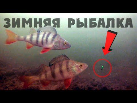 Зимняя рыбалка 2019-2020! Ловля окуня зимой на безмотылку. Подводные съемки.