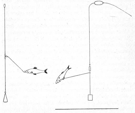 Монтаж на щуку при ловле на поплавочную удочку