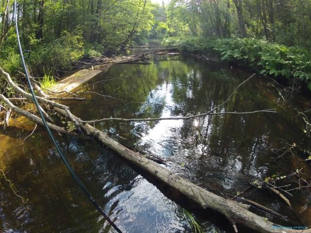 ловля хариуса летом на малых реках