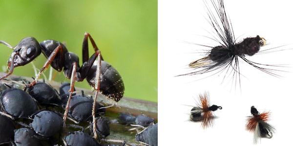 мушка муравей
