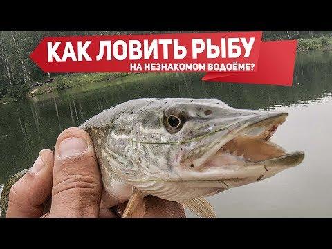 Как найти рыбу на незнакомом водоёме? Рыбалка на микроджиг в пруду | Рыбалка с Fishingsib