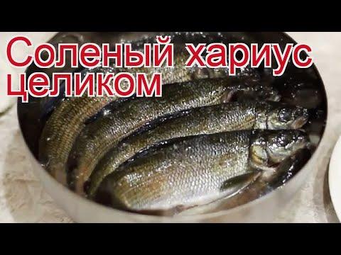 Рецепты из хариуса - как приготовить хариуса пошаговый рецепт - Соленый хариус целиком