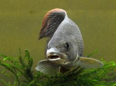 Хариус - рыба с характером
