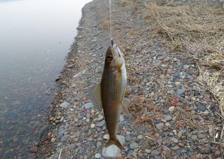 ТОП-5 видов рыб, которые ловятся в черте города