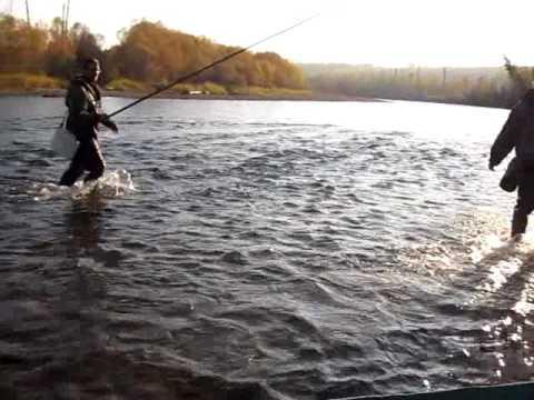 Хариус на поплавочную удочку - YouTube