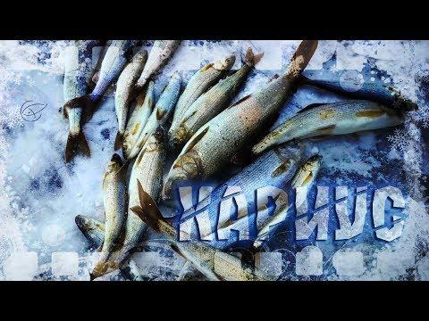 ВНЕЗАПНЫЙ ЖОР ХАРИУСА НА #БАЙКАЛЕ Таланки Рыбалка в Сибири