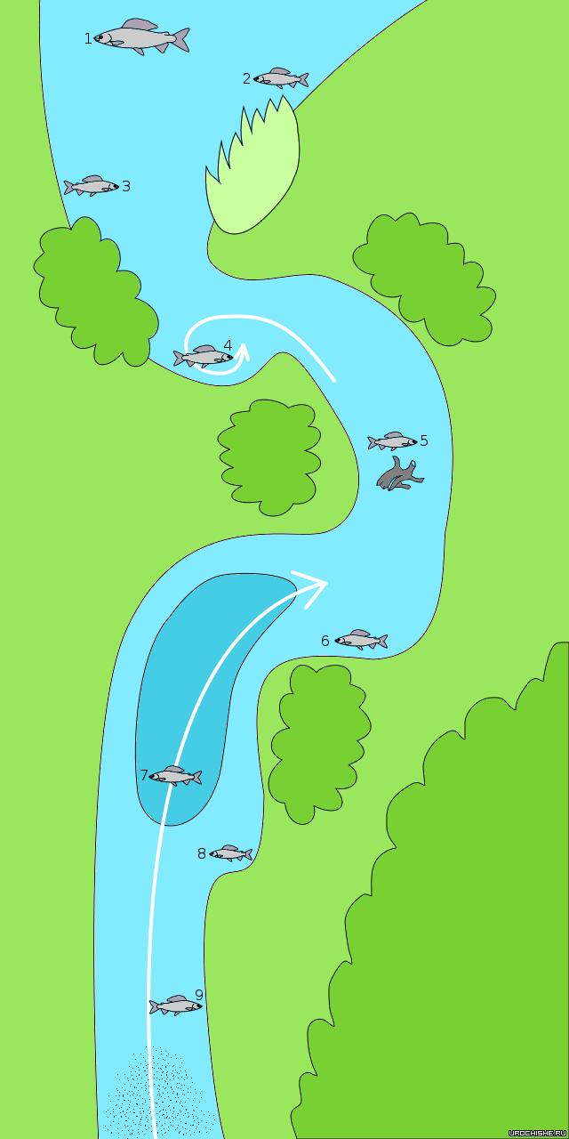 Ловля хариуса на малых реках - карта стоянок рыбы