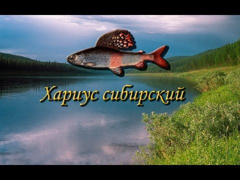 Русская Рыбалка 3.9 Хариус сибирский