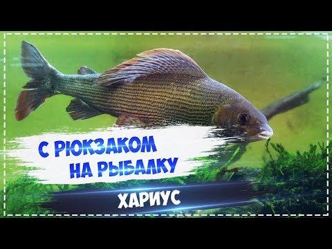 Русская Рыбалка Installsoft Edition 3.7.6 Вуокса - КВ Хариус
