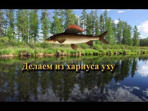 Русская Рыбалка 3.9 Хариус на уху