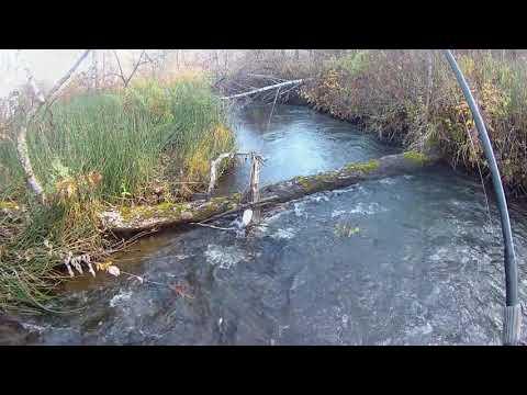 Монологи о рыбалке. Хариус малых рек часть 3.