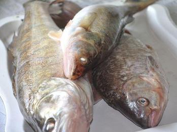 рыба копченая в домашних условиях в коптильне
