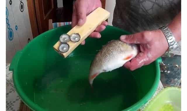 Чистка рыбы самодельной рыбочисткой
