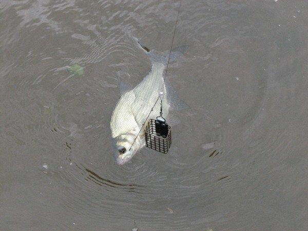 Для ловли на течении чаще всего используются квадратные сетчатые кормушки.