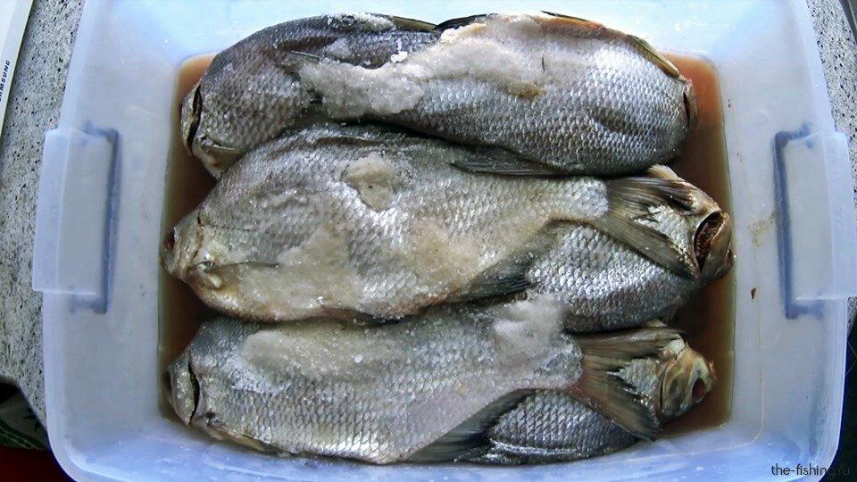 Вкусная и правильная засолка рыбы для вяления. Безопасный посол
