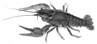 Фотография животного