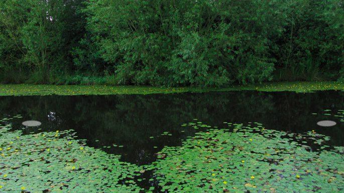 Поиск карася в пруду