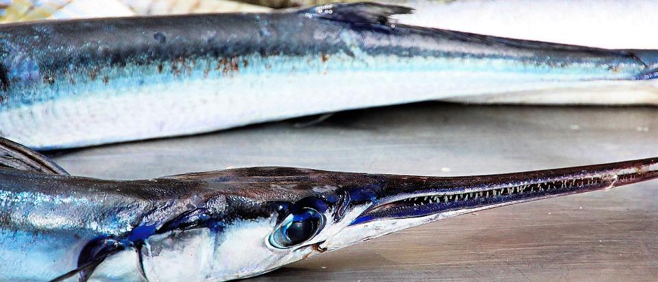 Рыба, Море, Синий, Морепродукты, Фауны, Рыбы, Воды